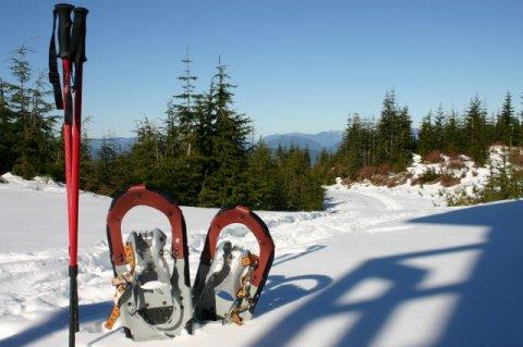 Восемь зимних развлечений в снежной Швейцарии. Горные лыжи не включены!